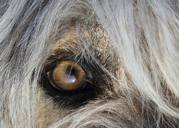zara-occhi